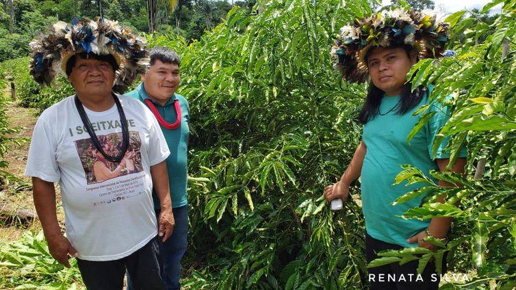 Etnia de Roraima vai produzir café em parceria com maior marca brasileira